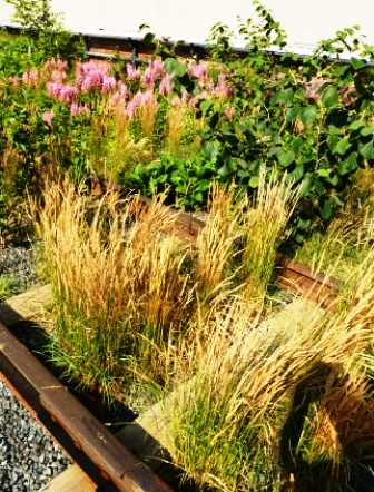 High Line Garden-Calamagrostis brachytricha-with railroad tracks showing-resized-2