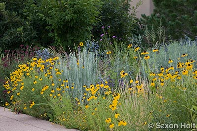 Meadow along sidewalk in Colorado garden