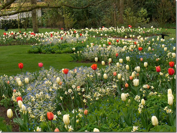 Bruidslaantje_2005_6[1].JPG-white tulips dotted with coral and forget me nots- JVDerKloet