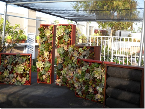 DSCN0244[1].JPG-Tube Planter #1