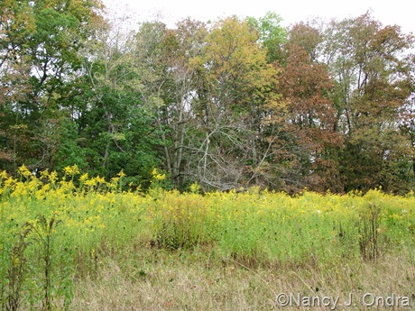 Meadow at farm with Solidago Oct 11 10