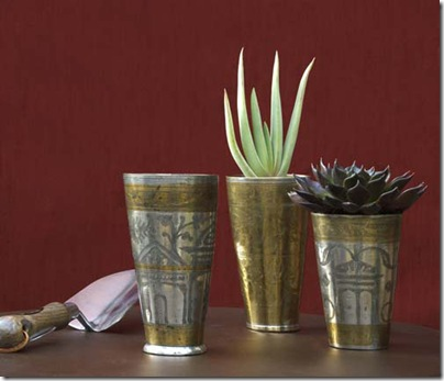Lassi cup with succulent plant