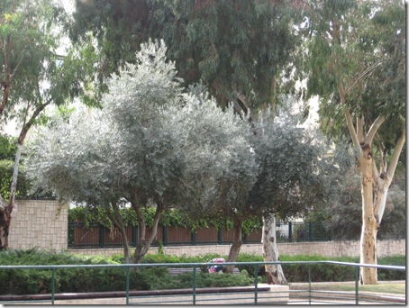 Israel photos-Tel Baruch North-12609 014