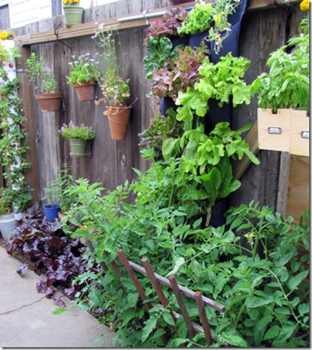photo-1-vertical-garden-on-[1]