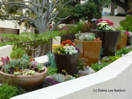 Grow this succulent for its flowers then throw it away - Succulent container gardens debra lee baldwin ...