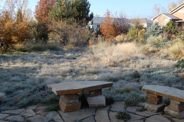 So much better than the mown stuff. A suburban garden grassland on a frosty morning in Colorado - Lauren Springer's garden in Fort Collins.