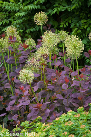 Chicago Botanic Garden border with Allium tight vertical
