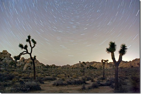 Stars in Joshua Tree_5557a