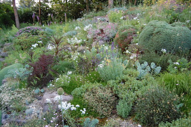 Rockeries are notoriously difficult to keep weed free but not here