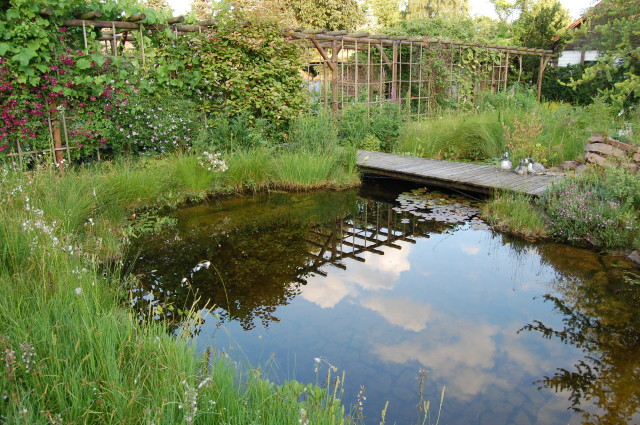 A natural swimming pool feels like the centrepiece of the garden. Water is cleaned by the action of plants and bacteria.