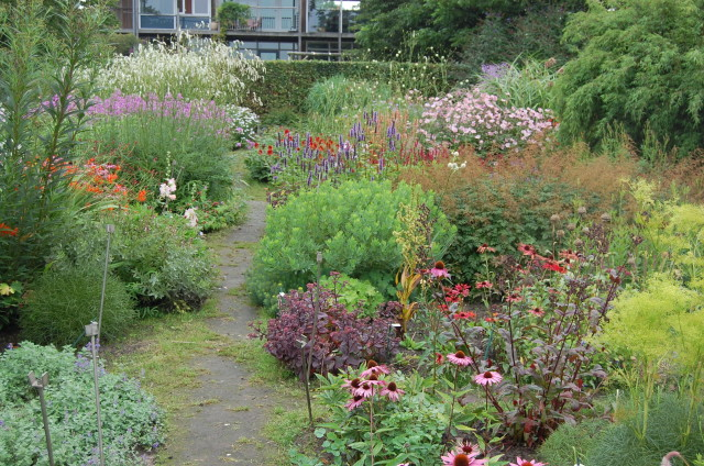 Coen Jansen's stock beds contain many exciting new plants