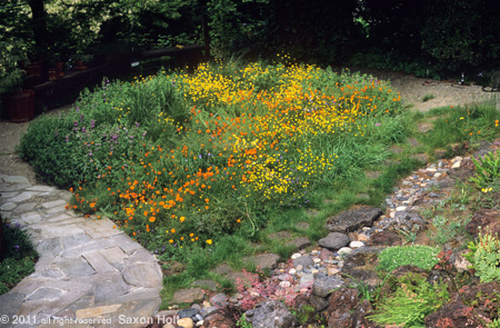 Small Lawn Converted to Flowering Meadow
