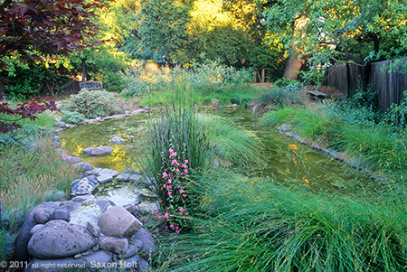 Lawn Converted to Backyard Pond Habitat