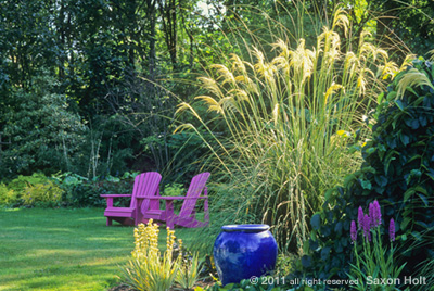 garden of linda cochran, cortaderia richardii