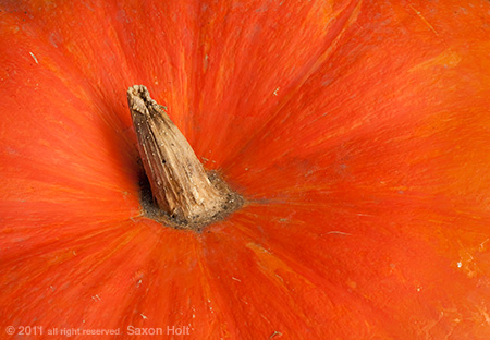 macro photo of orange heirloom pumpkin