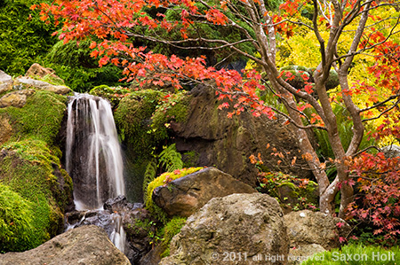 Autumn in Japanese Tea Garden San Francisco
