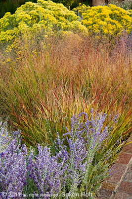 vertcial photo gardens in autumn with panic grass, Museum Hill Santa Fe