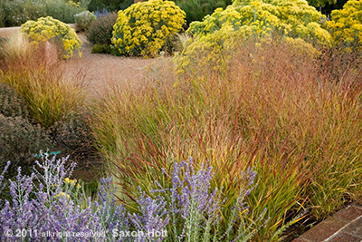 fall color garden Museum Hill, Santa Fe