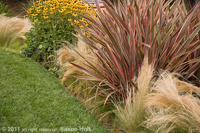 phormium and feather grass in garden border