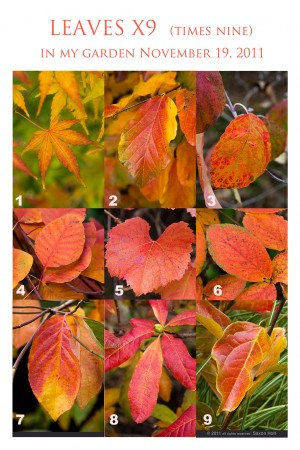 Leaves_x9_full_1024