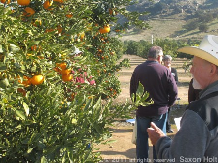 citrus farmers