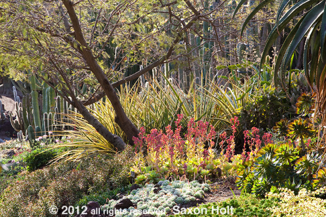 the desert garden at the huntington botanic garden