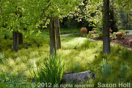 Carex meadow lawn under trees