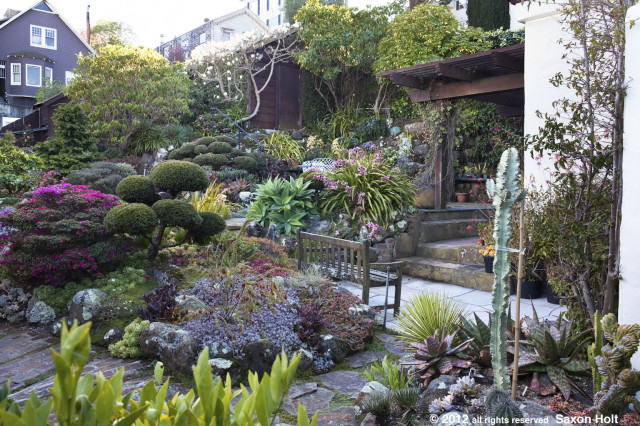 san francisco garden with magnolia tree