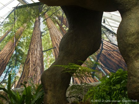 redwood tree photo mural behind dinosaur