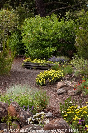 dirt path in California native plant garden