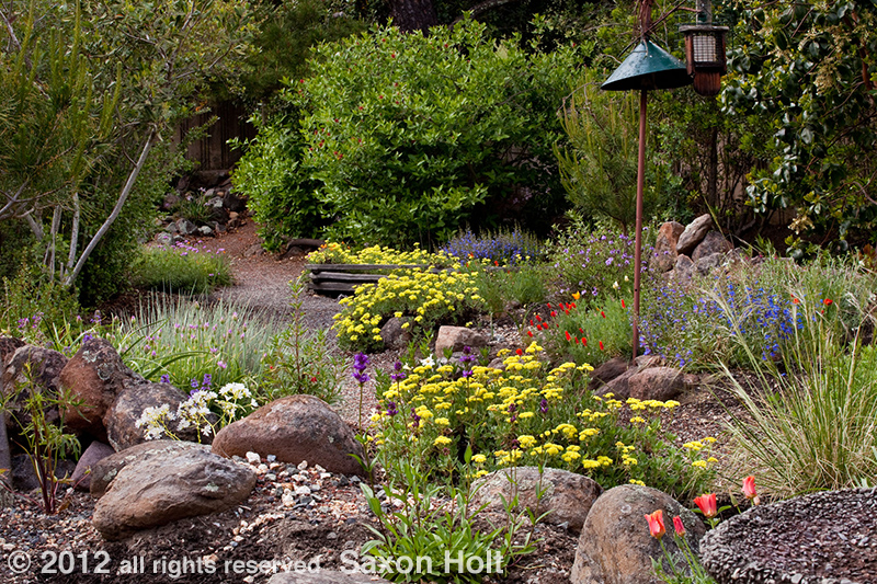 17 Best 1000 images about California Native Plantss on Pinterest