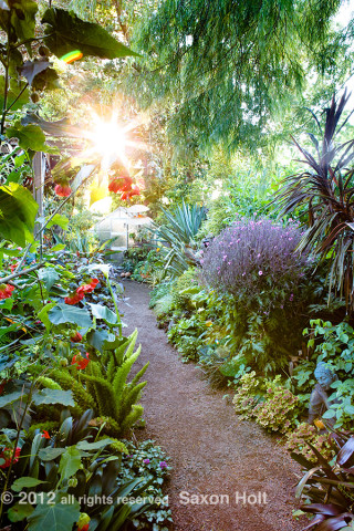 Sunburst on Path - Michelle Derviss Garden