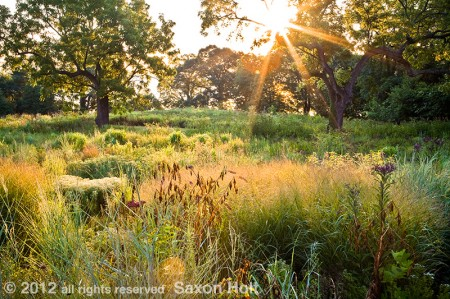Dawn - Virginia Meadow Garden