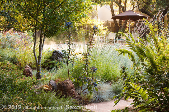Morning Light Poolside in Habitat Garden
