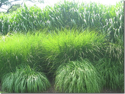 #10-simple ornamnetal grass garden-Doe Run-71407 044