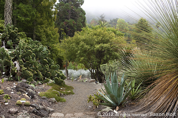 UC Berkeley New World Desert garden
