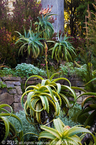 succulent garden with aloe SFBG Workshop