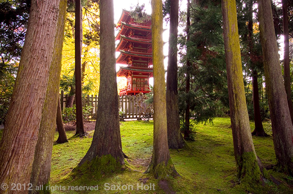 Pagoda through trees, Japanese Tea Garden in Golden Gate Park, San Francisco