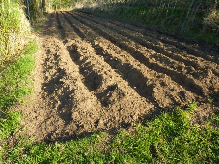 Tilled Soil Ready For Planting