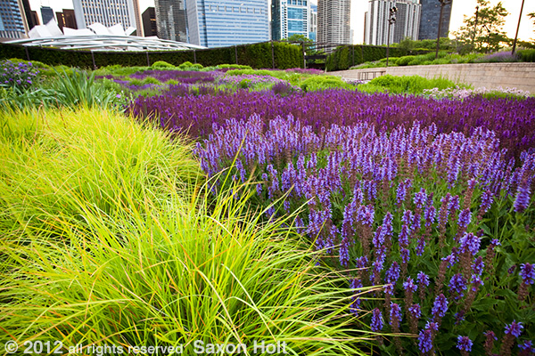 Note the three distinctive parts of this  photo:  the block of color, the buildings, and the texture of the prairie meadow.  Lurie Garden - Chicago