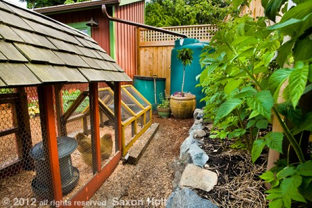 A gardener who is intrigued enough t study this photo will find all the elements of a sustainable garden - compost pile, cistern with rain gutter, chickens, berries growing in rich soil.  A non gardener is not likely to give the photo a close look.