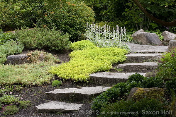 stone steps thru groundcover garden