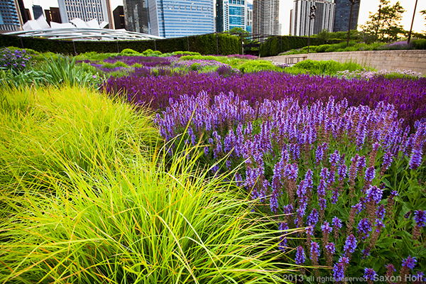 lurie meadow at millenium park