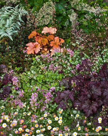 ground cover garden tapestry