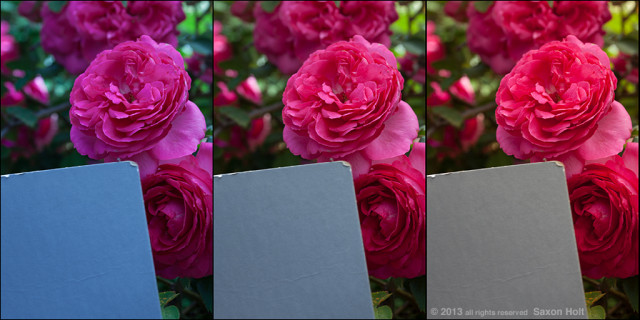gray card test in rose garden