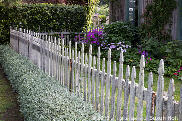rustic picket fence edging California garden; Moss Garden