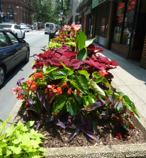 Tropical planted container on side street of Philadelphia