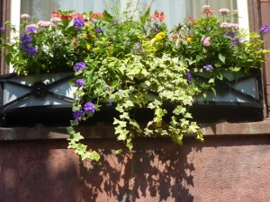 2013-06-26 Philadelphia - center city - windowboxes, containers, South Philly 003.jpg- revised-01
