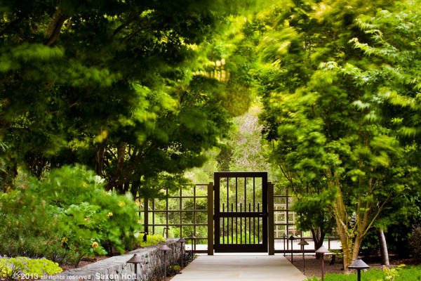 garden gate with windy trees