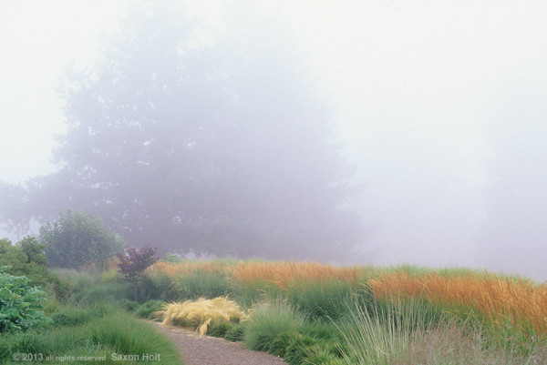 foggy morning in grass garden